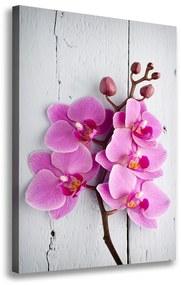Foto obraz na plátne Ružová orchidea pl-oc-70x100-f-118409675