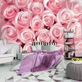 Fototapeta - Ružové ruže (254x184 cm), 10 ďalších rozmerov