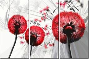 Tlačený obraz Krásne červené púpavy 90x60cm 4025A_3J