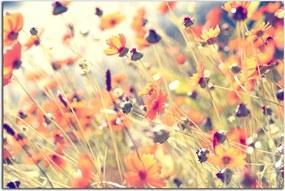 Obraz Lúčne kvety 1050AX