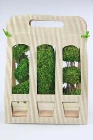 Zelené sušené bonsaje 3ks v darčekovom balení 24cm