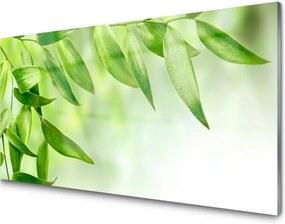 Obraz plexi Zelené Listy Príroda