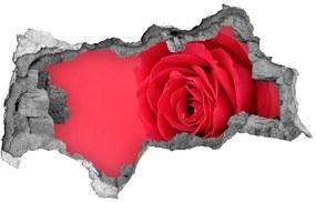 Diera 3D fototapeta na stenu Červená ruža nd-b-77656963