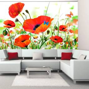 Fototapeta - Country poppies 400x309