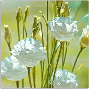 Obraz Biele kvety 2917AY