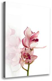 Foto obraz na plátne Ružová orchidea pl-oc-70x100-f-18886978