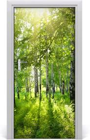 Fototapeta na dvere  Břízová les