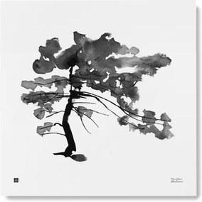 Plagát Pine Tree 50x50 Teemu Järvi