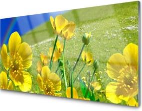 Obraz na skle Lúka Kvety Dúha Príroda