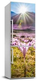 Nálepka na chladničku Krókusy v horách FridgeStick-70x190-f-146993619