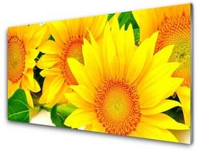 Sklenený obklad Do kuchyne Slnečnica kvet príroda 140x70cm