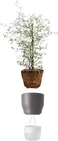 Samozavlažovací kvetináč kriedovo sivý v.18cm, eva solo