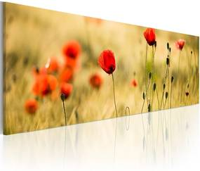 Obraz na plátne - Spring poppies meadow 120x40 cm