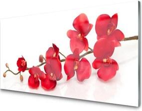 Obraz na akrylátovom skle Kvety rastlina