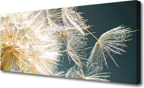 Obraz Canvas púpava Rastlina