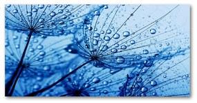 Foto obraz sklenený horizontálny semeno púpavy cz-osh-100x50-f-83510809