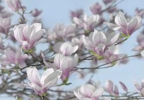 Fototapeta Komar Magnolia 8-738 | 368 x 254 cm