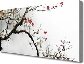 Obraz na plátně Vetva Príroda Rastlina