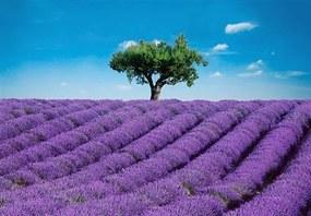 Fototapety, rozmer 366 x 254 cm, Provence, W+G 00144