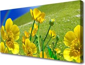 Obraz na plátně Lúka Kvety Dúha Príroda