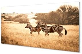 Nástenný panel Zebra poľa sunset 120x60cm