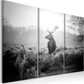 Obraz - Black and White Deer I 90x60