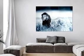 Obraz Lion King 140x95cm sklo