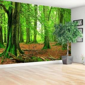 Fototapeta buky les