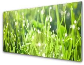 Sklenený obklad Do kuchyne Tráva rastlina príroda 120x60cm