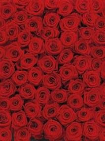 Fototapety, rozmer 194 x 270 cm, ruže, Komar 4-077