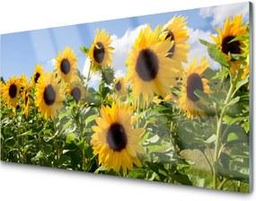 Sklenený obklad Do kuchyne Slnečnica Kvet Rastlina