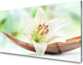 Obraz na skle Kvet Rastlina Príroda