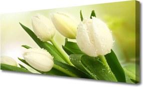 Obraz na plátně Tulipány Kvety Rastlina
