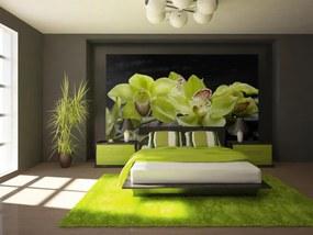Murando DeLuxe Zelená orchidej 150x116 cm