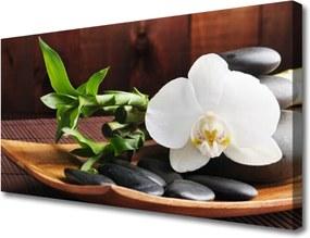Obraz Canvas Kamene Zen Biela Orchidea