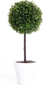 Buxusový stromček biela