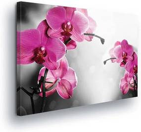 GLIX Obraz na plátne - Pink Orchid Flowers 100x75 cm