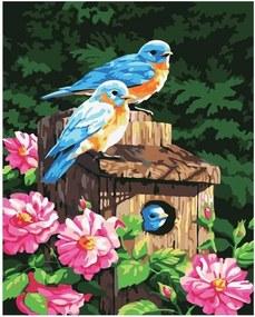 """Maľovanie podľa čísiel """"Vtáky"""" 50x40 cm"""