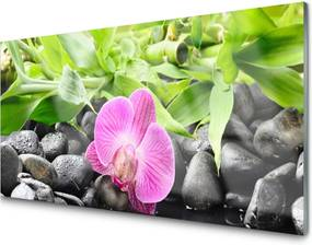 Sklenený obklad Do kuchyne Kvety Orchidea Kamene Zen