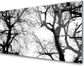 Sklenený obklad Do kuchyne Stromy Príroda Čiernobiely