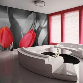Fototapeta - Červené tulipány na čiernom a bielom pozadí 200x154 + zadarmo lepidlo