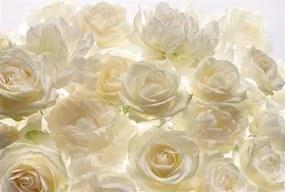 Vliesové fototapety, rozmer 368 x 248 cm, ruže, KOMAR XXL4-007