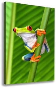 Foto obraz na plátne Rosnička zelená pl-oc-70x100-f-71303714