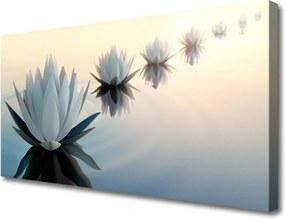 Obraz Canvas Vodné Lilie Biely Lekno