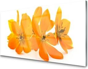 Obraz na akrylátovom skle Oranžové kvety