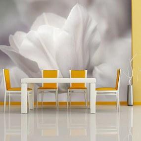 Fototapeta Bimago - Tulip - black and white photo + lepidlo zadarmo 400x309 cm