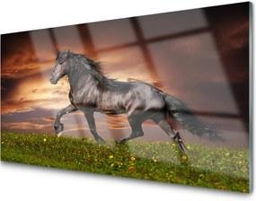 Obraz na akrylátovom skle Čierny Kôň Lúka Zvieratá