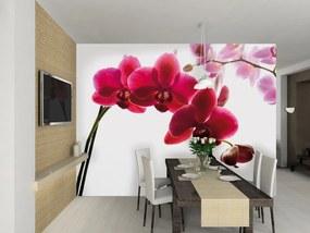 1Wall fototapeta Orchidea 315x232 cm