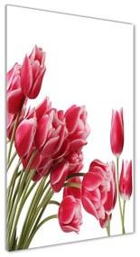 Foto obraz akrylový Červené tulipány pl-oa-70x140-f-109710799