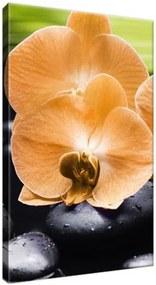 Obraz na plátne Oranžová orchidea 20x30cm 1713A_1S